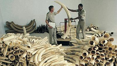 Illegal ivory trade