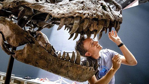 Tyrannosaurus Rex iskeleti