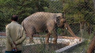 Kavaan az iszlámábádi állatkertben