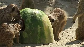 Zoo heat