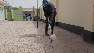 Le Kenya optimiste dans la lutte contre les criquets