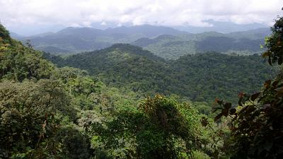 A picture of the biodiverse Ebo Forest in Cameroon.