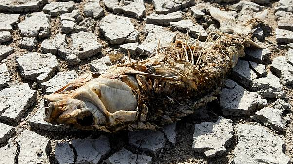 The remains of a fish lies on the parched Loire River bed at Ancenis, western France on August 11, 2020