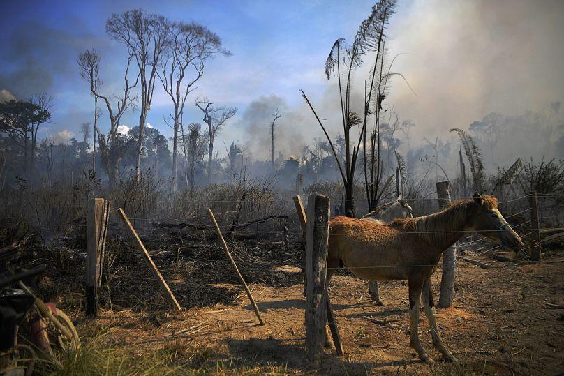 Carl de Souza/AFP