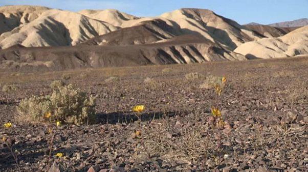 Temperatura no Vale da Morte atinge máximos