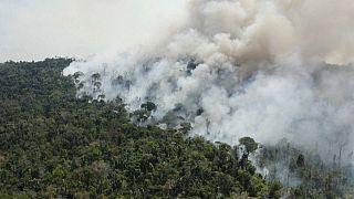 شاهد: النيران تلتهم مساحات شاسعة من غابات الأمازون في البرازيل مع بداية موسم الحرائق