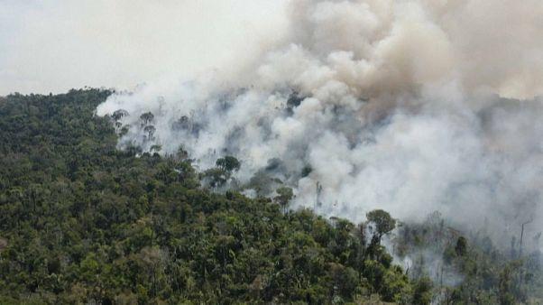 В Амазонии снова запылали дождевые леса