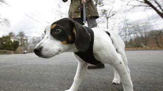 Almanya'da köpek yasası