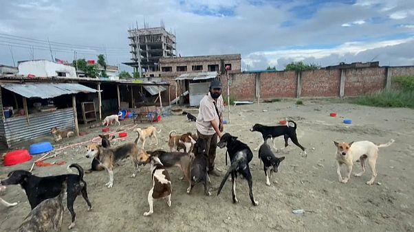 Bangladeş hayvan barınağı