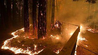 آتشسوزی جنگلی در کالیفرنیا