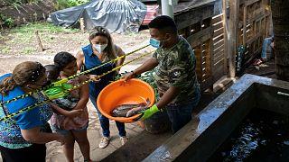 ترية الأسماك في الأحواض في السلفادور