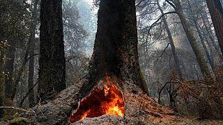 Калифорния: бокал вина на пепелище