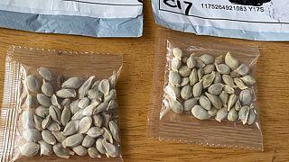 Çin'den gönderilen tohumlar