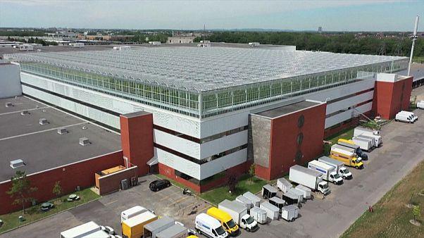 بزرگترین گلخانهٔ روی بام دنیا در مونترئال کانادا