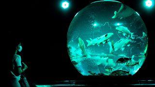 شاهد: الآلاف من الأسماك الذهبية معروضة في  أكواريوم فني باليابان