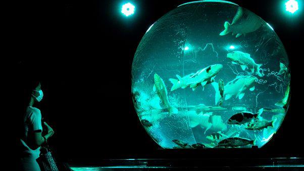 طراحی خیرهکننده آکواریوم ژاپن؛ نمایش هنری هزاران ماهی در رقص رنگ و نور