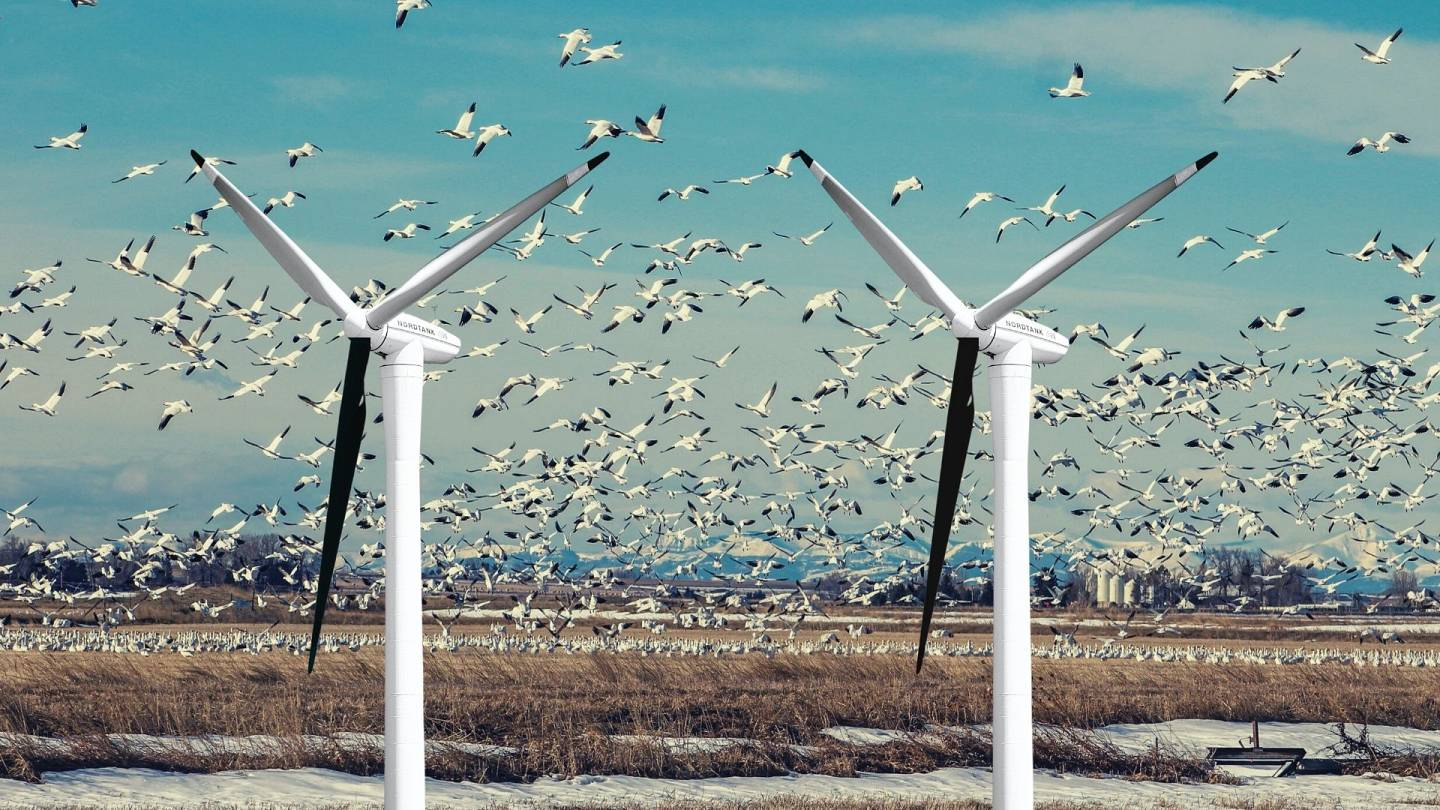 Why Are Wind Turbines Being Painted Black Living
