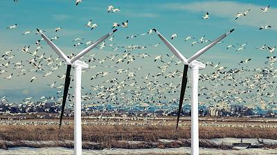 A single blade of each turbine being painted black could prevent bird strikes.