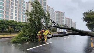 Taifun Bavi zieht über Süd- und Nordkorea