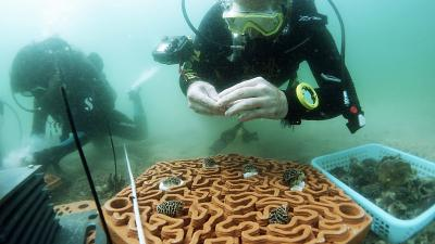 The 3D printed tiles have intricate patterns that mimic brain corals.