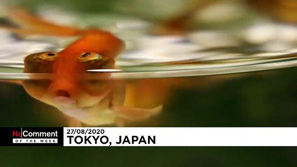 Tokio Art Aquarium
