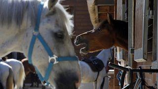 Fransa'da esrarengiz şekilde telef edilen atlar