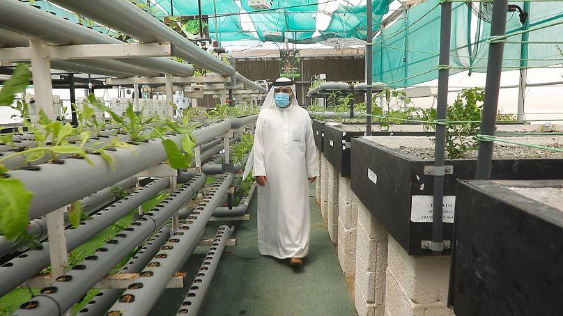 Hussain Al Mahmoudi monitors the crops at SRTI