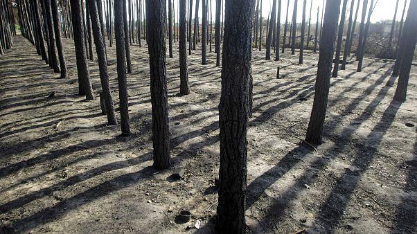 Последствия лесного пожара под Воронежом, июль 2010