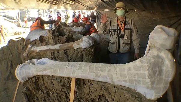 El arqueólogo Rubén Manzanilla López muestra un hueso de mamut