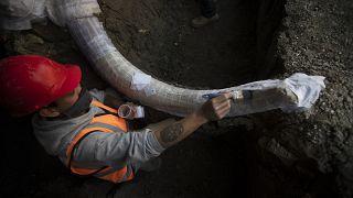 دراسة: أقدم حمض نووي في العالم مصدره فيلة ماموث في سيبيريا