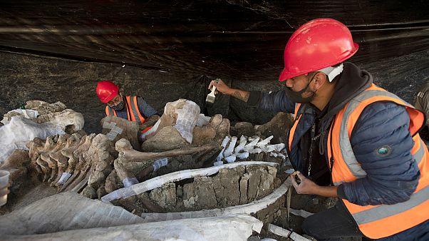 شاهد: اكتشاف هياكل لثديات ضخمة انقرضت قبل 20 ألف عام في المكسيك