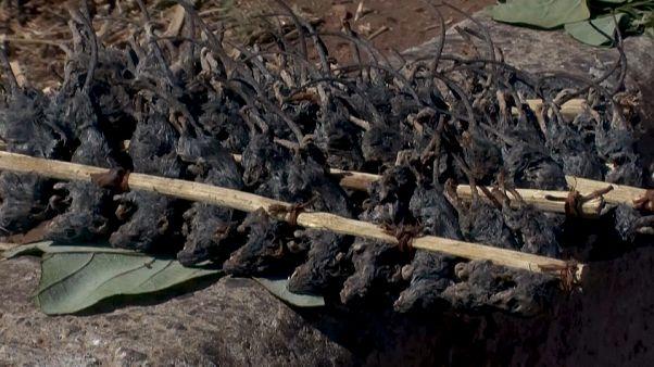 Malavi'de Covid-19'da yaşanan gıda kıtlığında fare tüketimi arttı