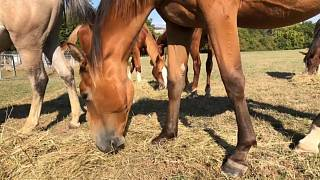 French authorities are investigating a series of horrific horse killings across the country