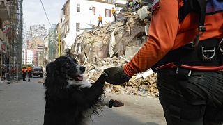 فلاش، كلب الإنقاذ التابع للفريق من تشيلي