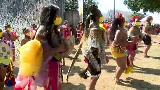 S.Africa's Zulu reed dance scaled back on virus fears