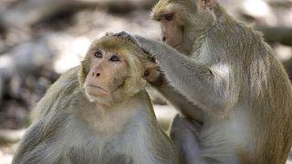 نتیجه یک تحقیق: حیوانات فاصله اجتماعی را برای جلوگیری از شیوع بیماری رعایت میکنند
