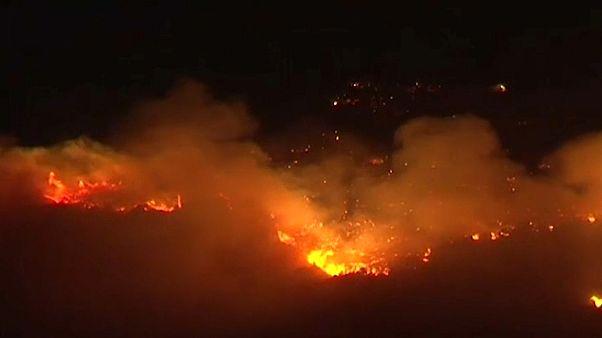 الحرائق تلتهم غابات غرب سوريا