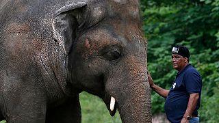 فیل کاوان در باغوحش پاکستان