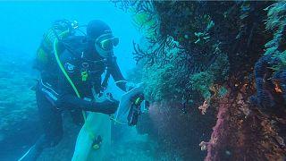 İklim değişikliği: Deniz ısı dalgaları gorgonları vurdu