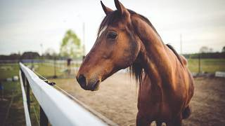 Bir at çiftliği