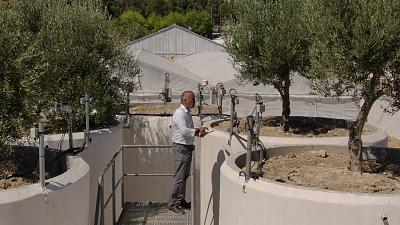 Smart farming: a revolution for traditional olive production on Crete