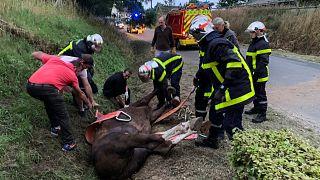 Un cheval pris en charge par les secours après avoir été attaqué le 9 juillet 2020 à Criquetot-sur-Logueville, dans le nord-ouest de la France