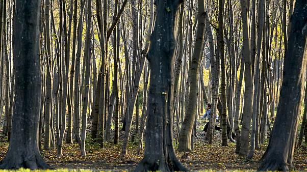 Romania forest