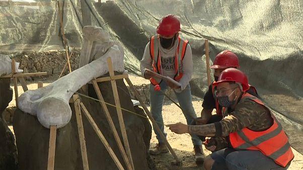 Mexique : sous un aéroport en cours de construction, des mammouths