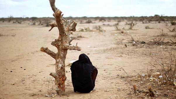 Terhes szomáliai nő ül egy kiszáradt farönk mellett egy kelet-kenyai menekülttábor közelében