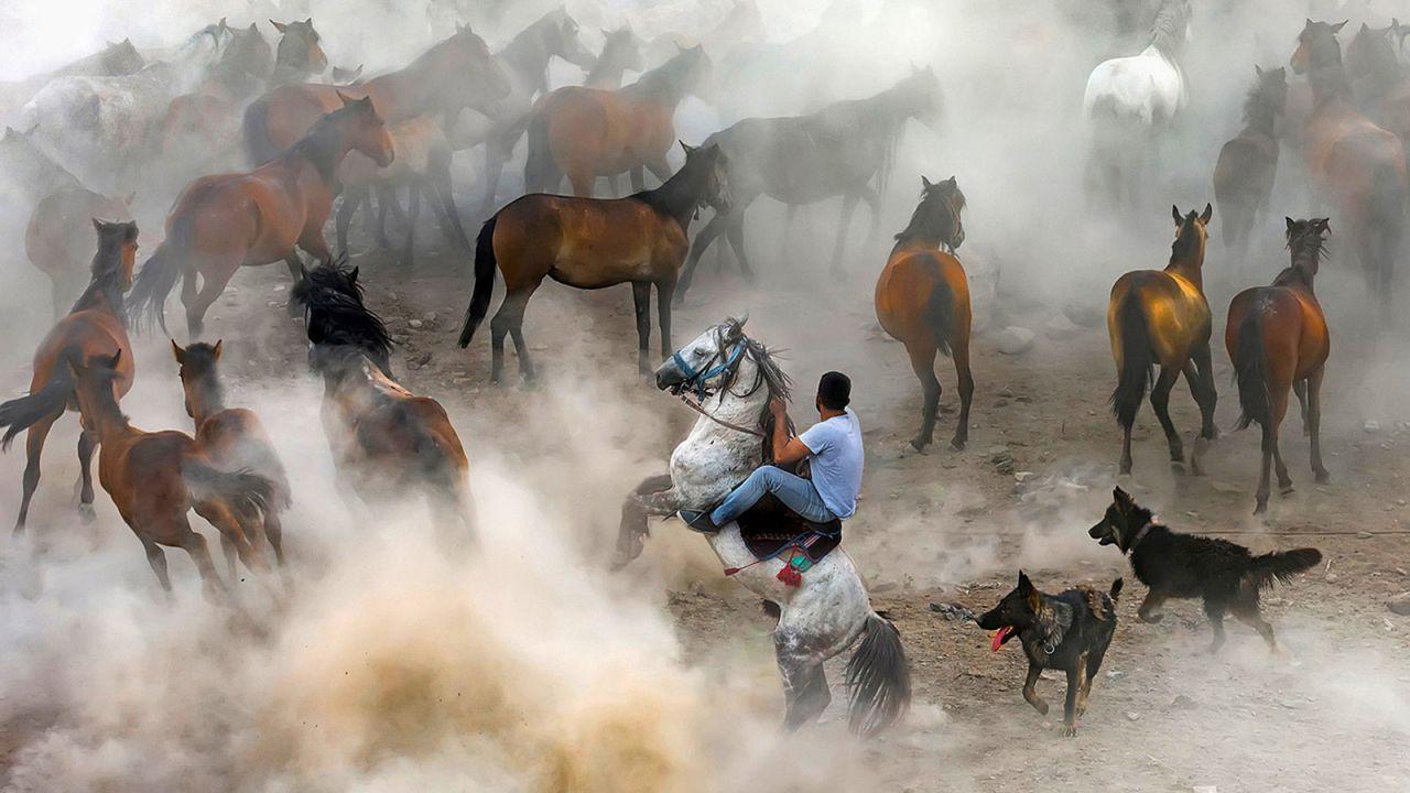 Wild horses in Kayseri Hörmetçi village in Turkey.
