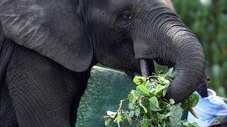 حديقة للحيوانات في ساحل العاج