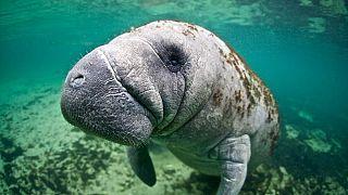 WWF-Report 2020: Tierbestände um 68 Prozent zurückgangen