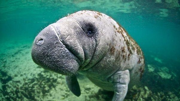 WWF : популяция животных на планете резко сократилась