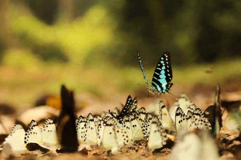 WWF Congo/Daniël Nelson